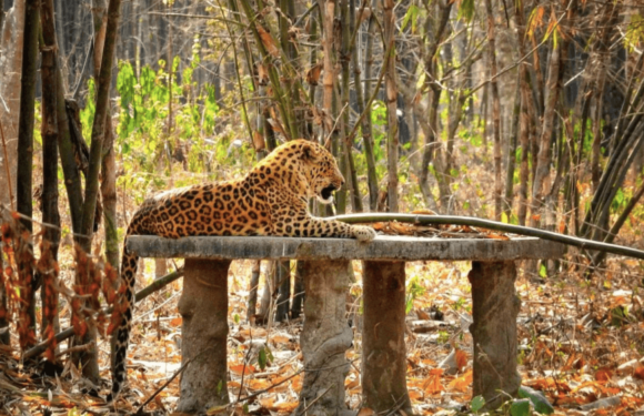Must Visit Places In Karnataka To Spot The Wonderful Wildlife