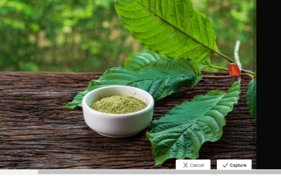 Kratom Tea vs. Kratom Powder – Key Differences & Similarities