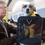 Flying in the U.S.A. with a Service Dog