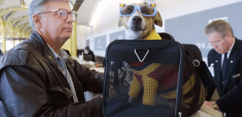 Tips for Flying in the U.S.A. with a Service Dog | NSARCO
