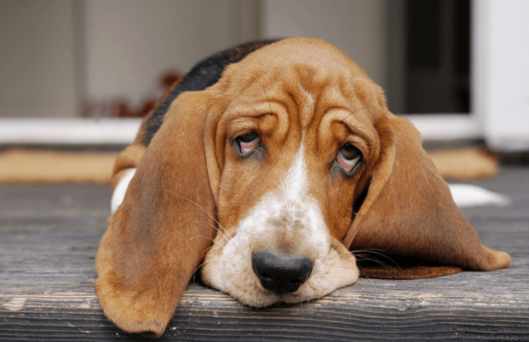 3 Common Viral Diseases in Canines