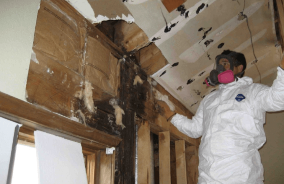 What Happens After the Pros From One of the Mold Remediation Services Colorado Springs Colorado Leaves Your Home?